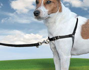 Easy Walk�: Pettorina educativa per cani