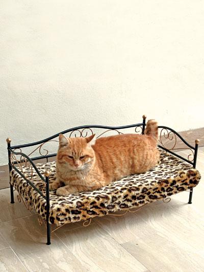 Letto con gatti la scelta giusta variata sul design - Letto per cani ...