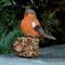 Uccellino fischiettante