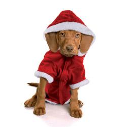 Costume Babbo Natale per cani