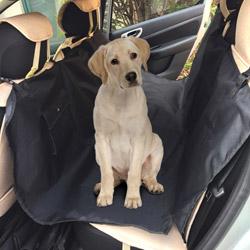 Telo coprisedili auto per cani
